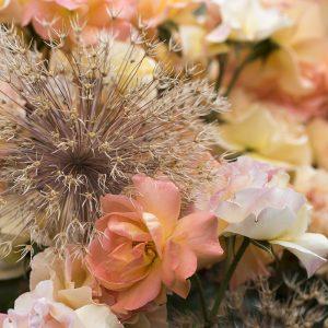 Allium und Rose