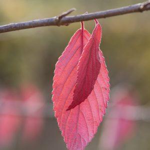 Blatt Herbst