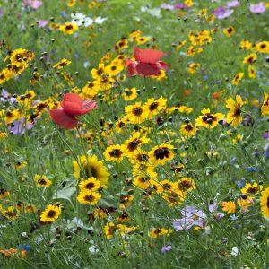 Blumenwiese mit Mohn