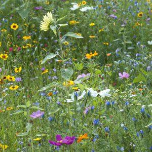 Blumenwiese mit Sonnenblume
