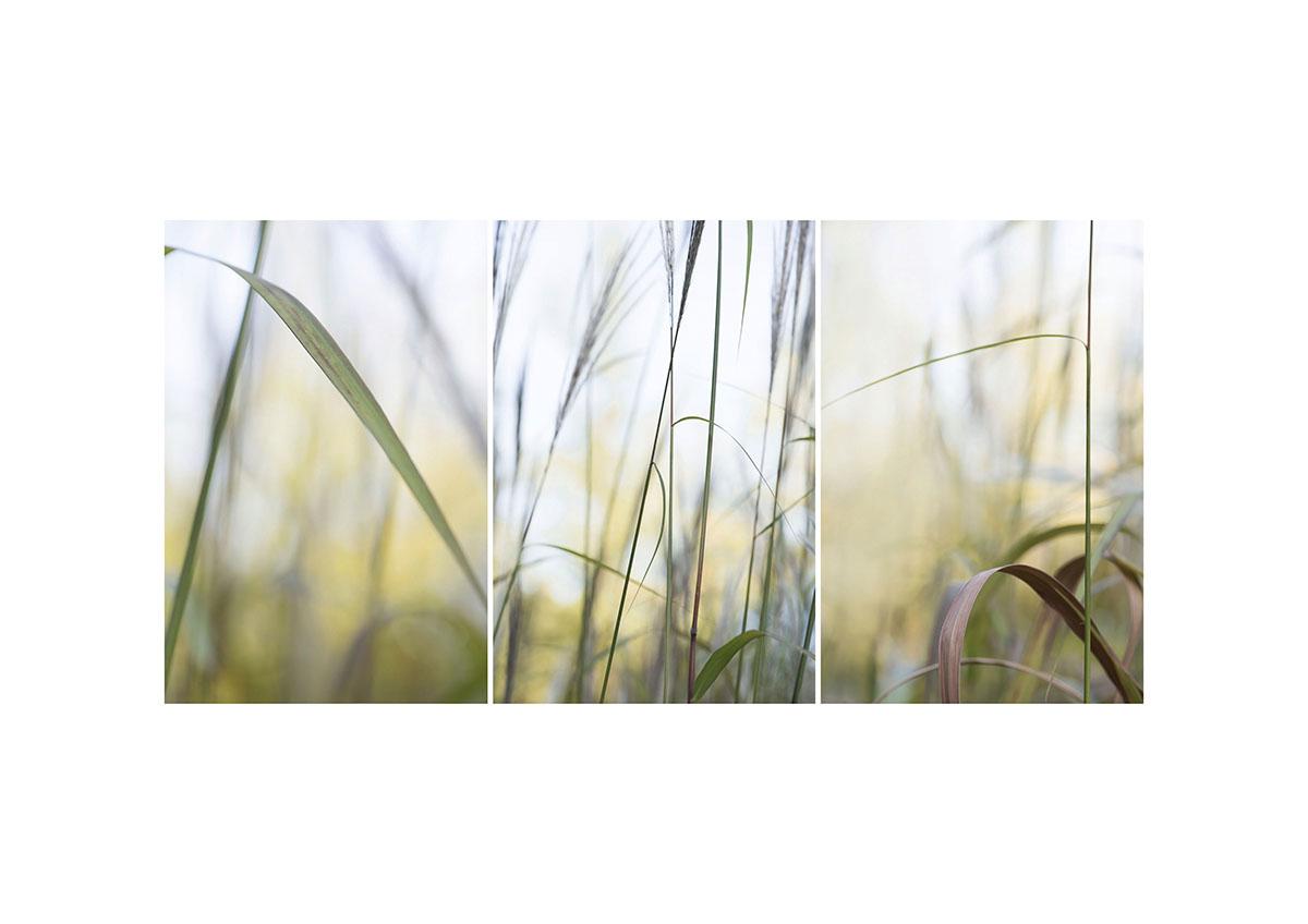 Collage 3x Gras