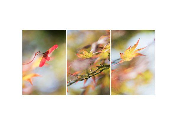 Collage 3x Spätsommer