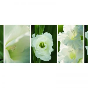Collage Gladiole weiss