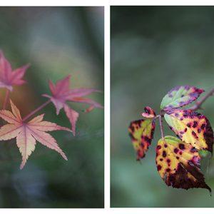 Collage Herbstblätter