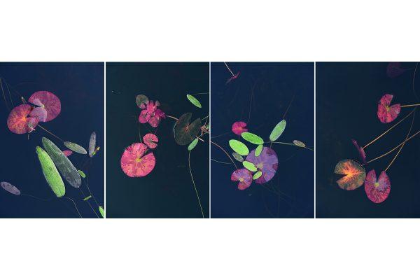 Collage Wasserblätter 1