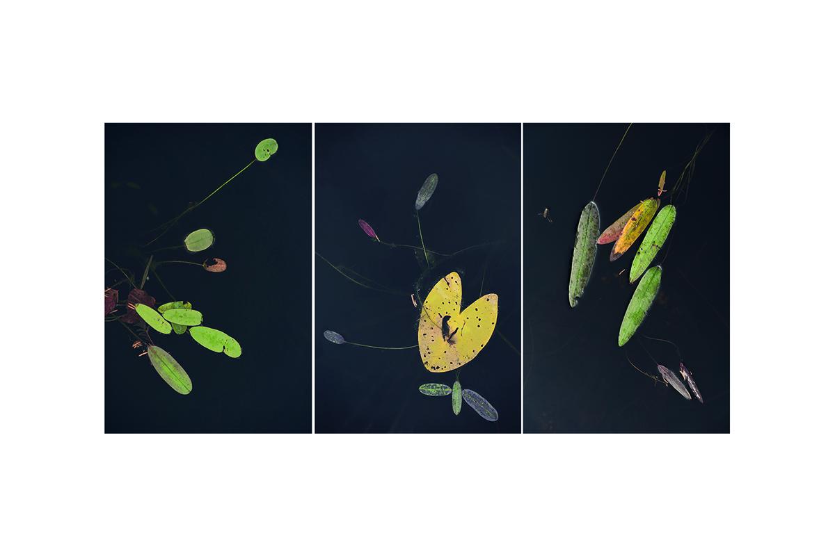 Collage Wasserblätter 2
