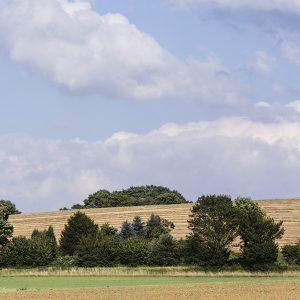 Getreidefeld Ruhr