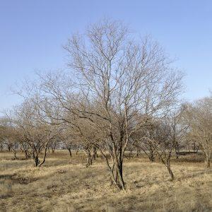 Landschaft Indien