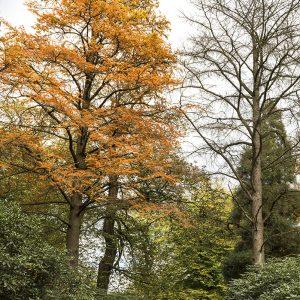 Lärche Herbst