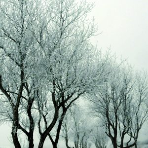 Schnee Winterlandschaft
