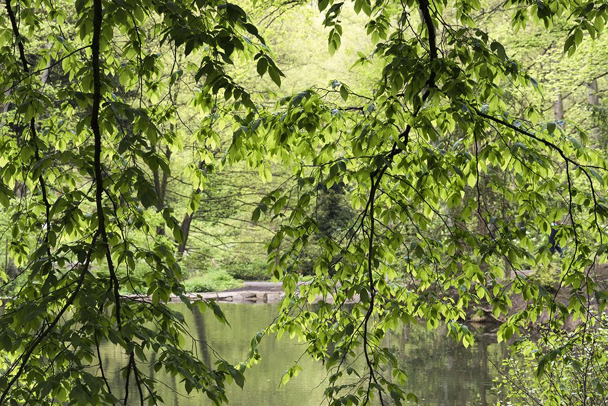 Wald Frühlingsblätter