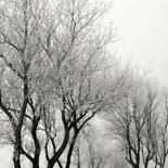 header-winter-155px
