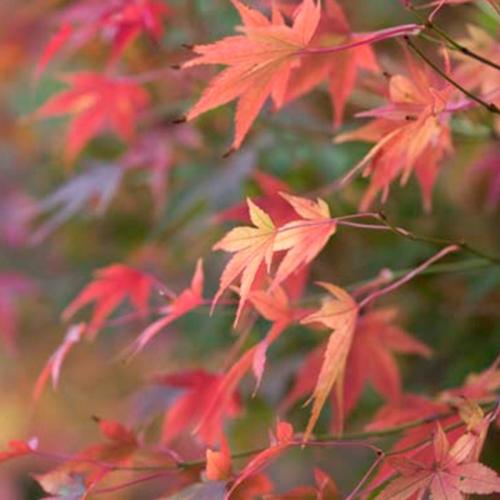 teaser-naturbilder-farben-rot-orange