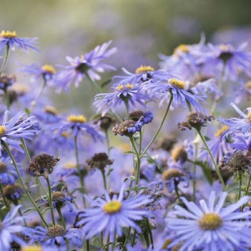 teaser-naturbilder-farben-violett-lila