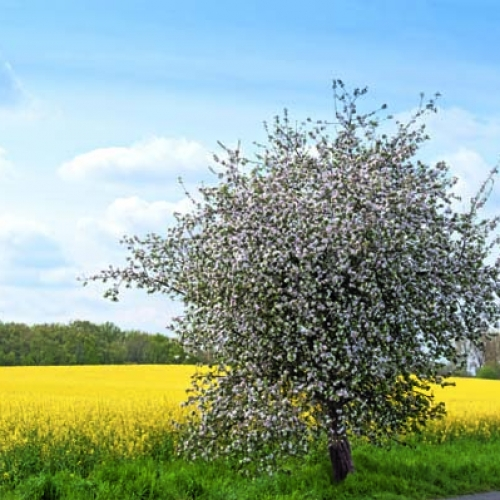 teaser-naturbilder-themen-baeume-straeucher