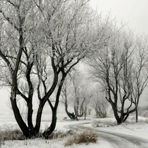 teser-naturbilder-jahreszeiten-winter